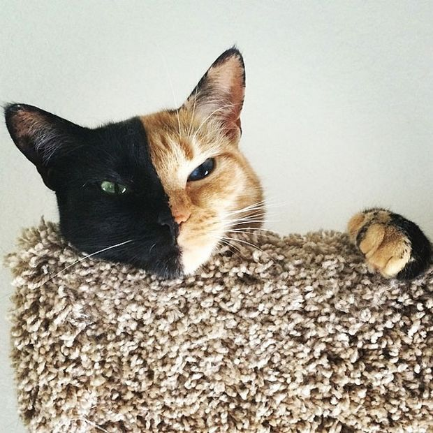 Cat Venus -4