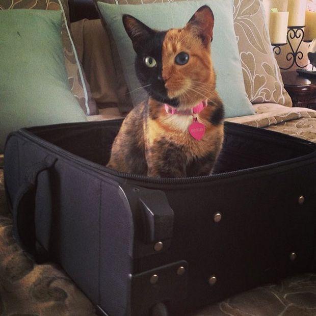 Cat Venus -8