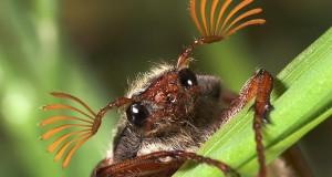 Макрофотография насекомых