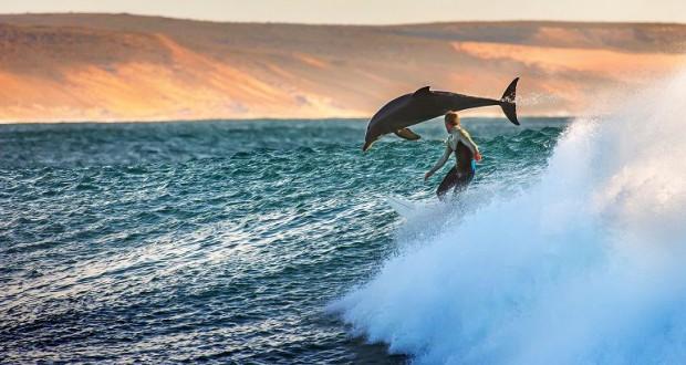 Серфингист и дельфины