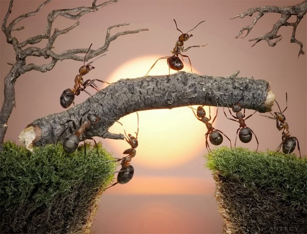 Андрей Павлов муравьи_1