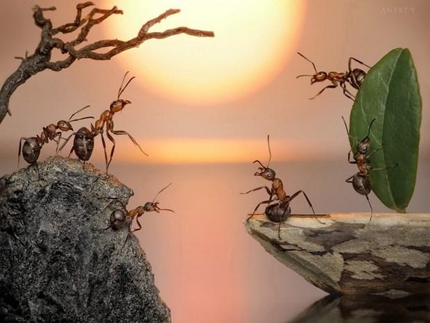 Андрей Павлов муравьи_10