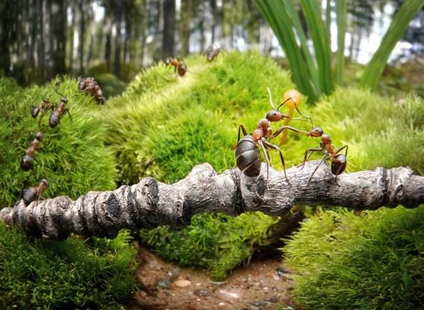 Андрей Павлов муравьи_12