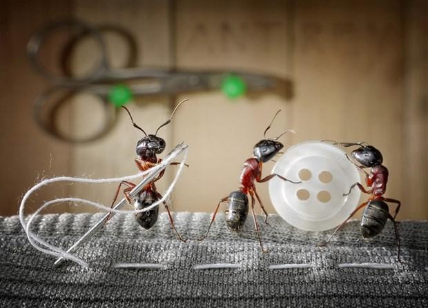 Андрей Павлов муравьи_13