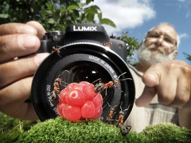 Андрей Павлов муравьи_14