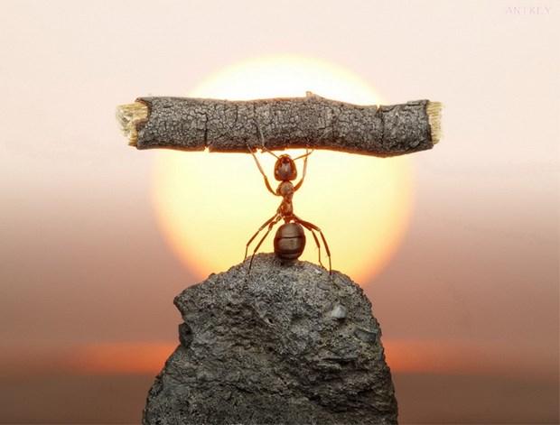 Андрей Павлов муравьи_2