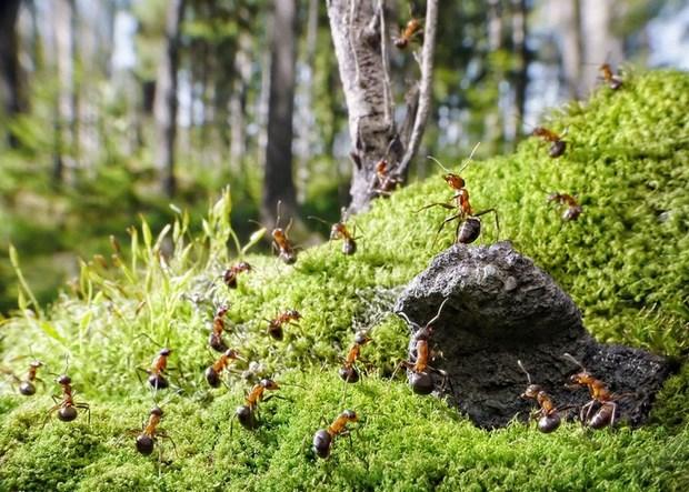 Андрей Павлов муравьи_7