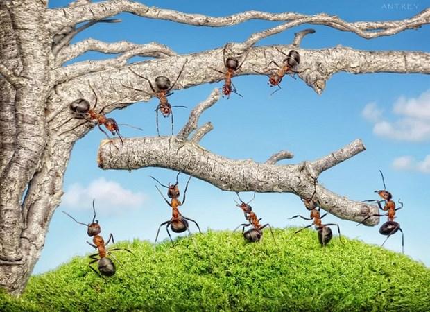 Андрей Павлов муравьи_8