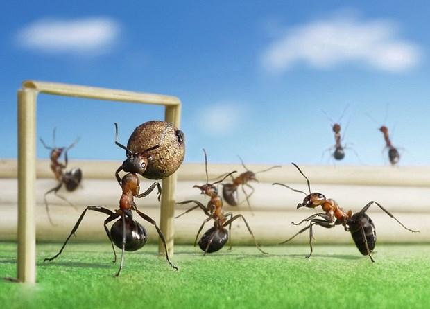 Андрей Павлов муравьи_9
