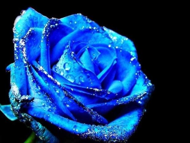 Синие розы-3