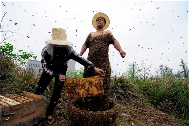 Костюм из пчел She Ping