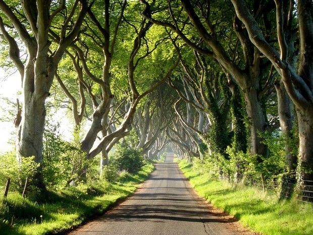туннели из деревьев-1