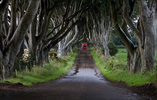туннели из деревьев-2
