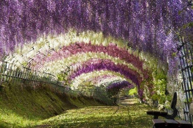 туннели из деревьев-4