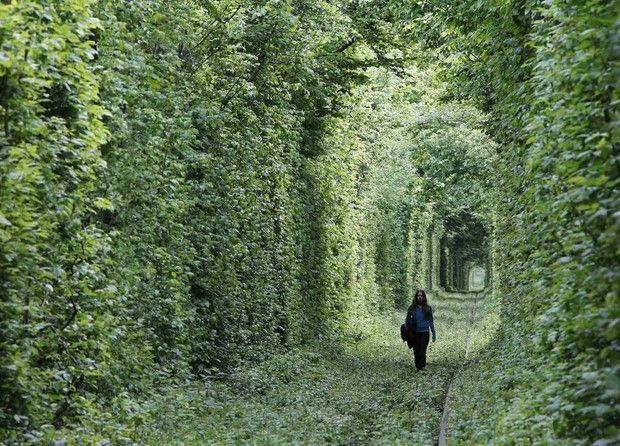 туннели из деревьев-5