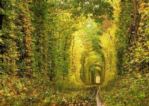 туннели из деревьев-6