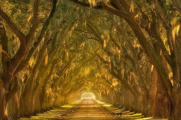 туннели из деревьев-7