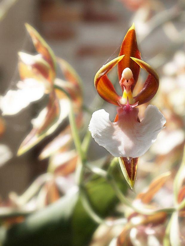 необычные цветы-20