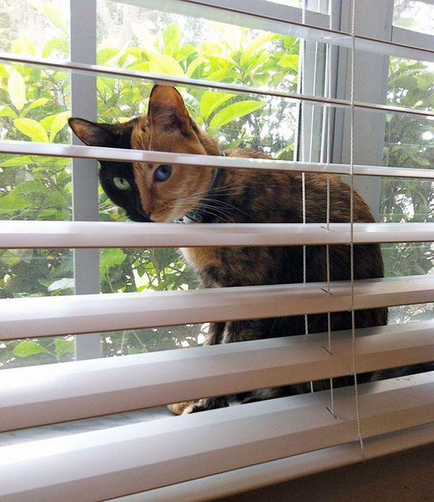 Cat Venus -3