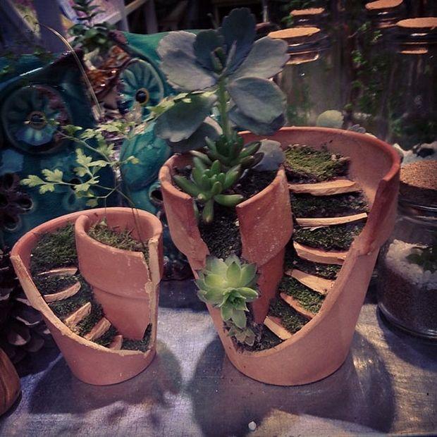 миниатюрный сад-1