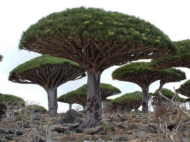 необычные деревья-1