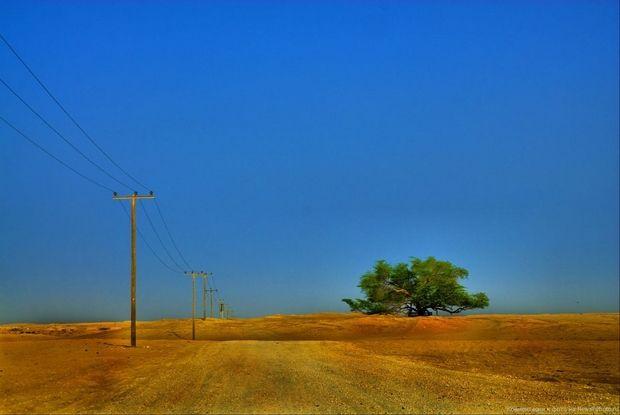 необычные деревья-11