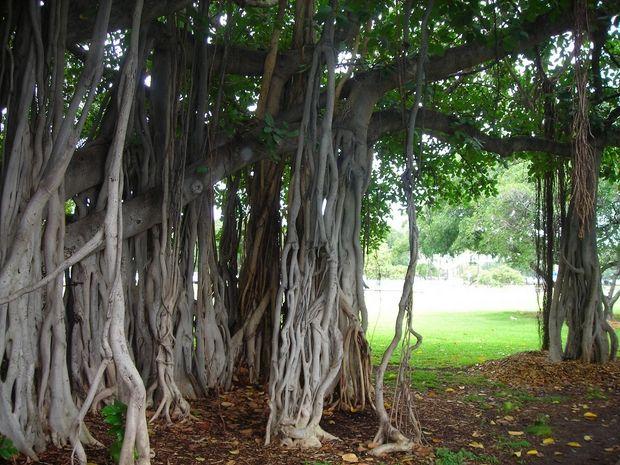 необычные деревья-16