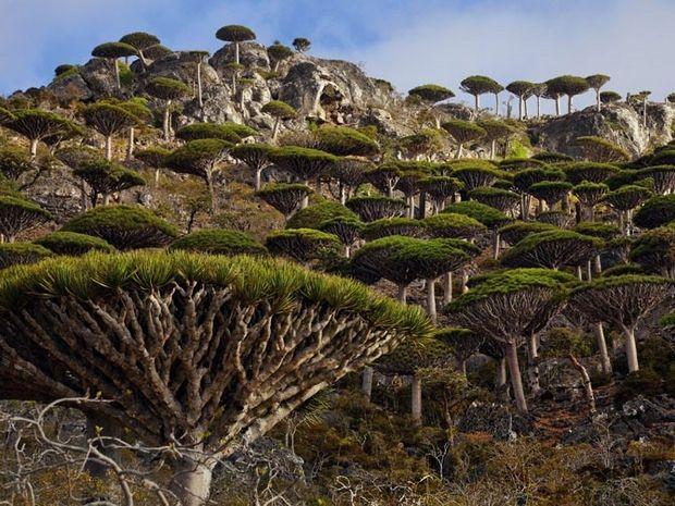 необычные деревья-2