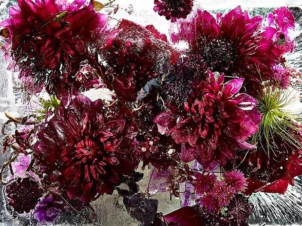 цветы необычайной красоты-2