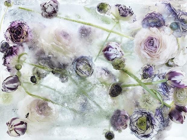 цветы необычайной красоты-4