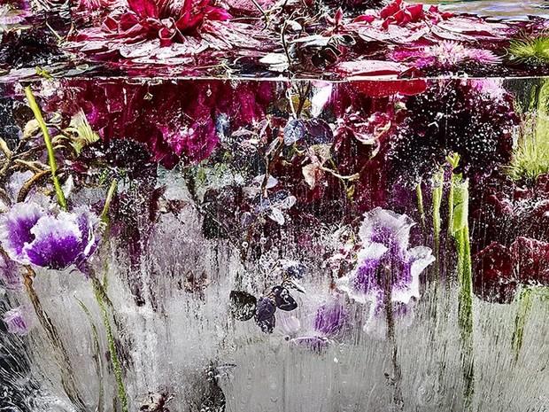 цветы необычайной красоты-5