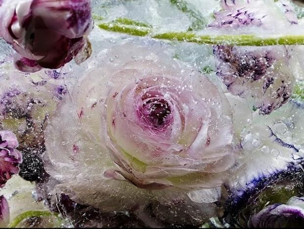 цветы необычайной красоты-6