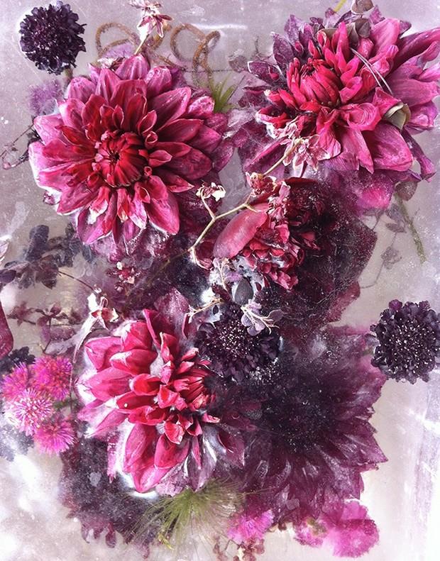 цветы необычной красоты-7
