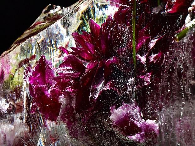 цветы необычной красоты-9