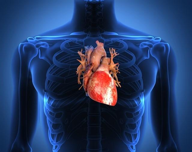 Человеческое сердце-1