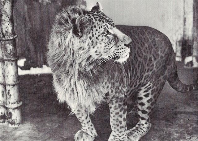 Гибриды в мире животных-10