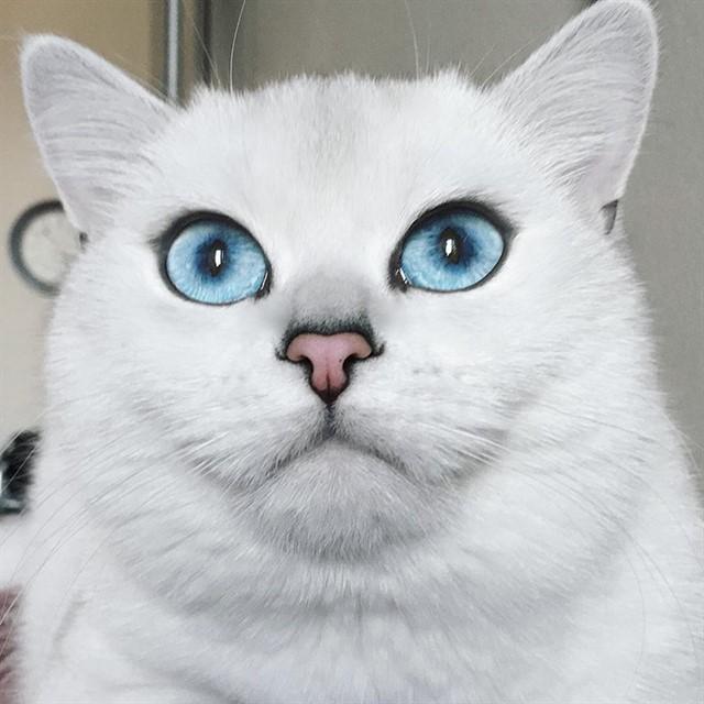 Кот с голубыми глазами-4