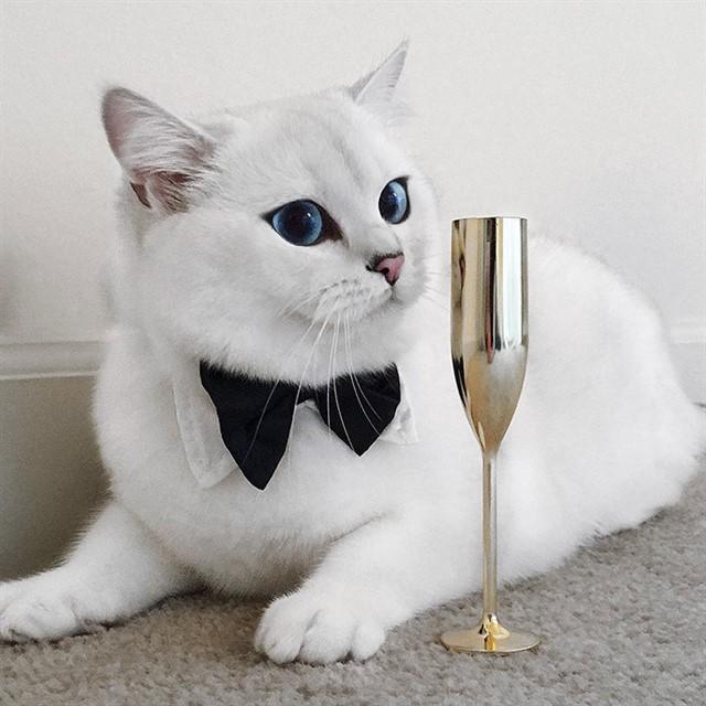 Кот с голубыми глазами-5