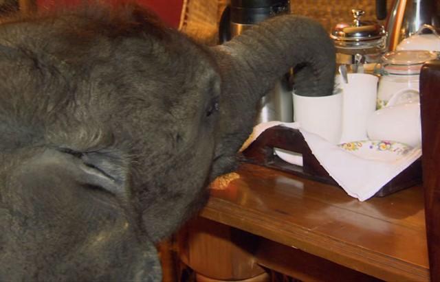 Спасенный слоненок по имени Мойо-5