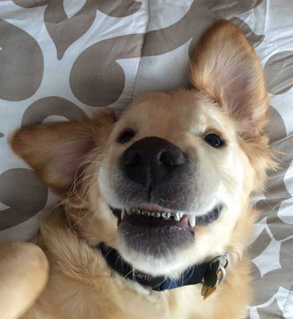 Собака с брекетами-1