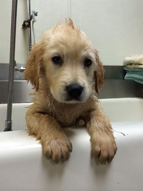 Собака с брекетами-3