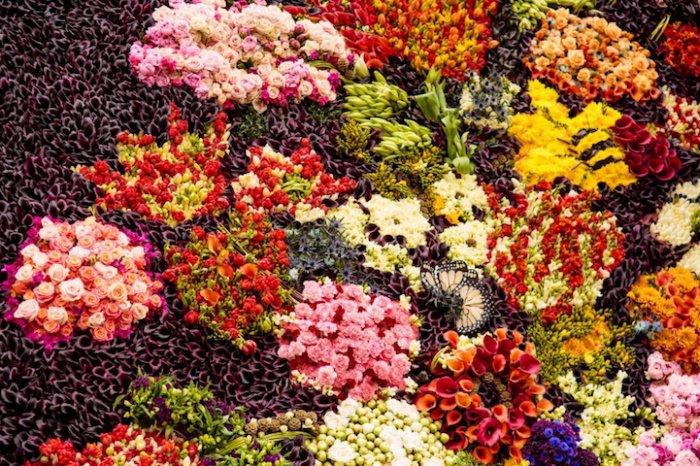 Картина из тысячи живых цветов-3