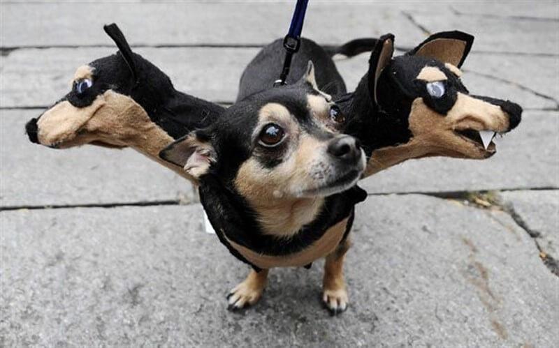 Хэллоуин для животных