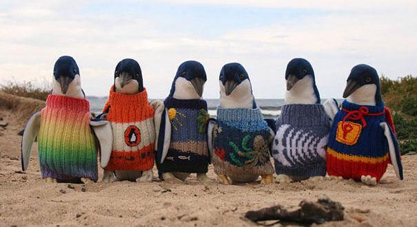 Вязанная одежда для животных