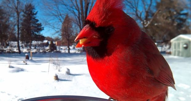 Фотографии птиц во время еды