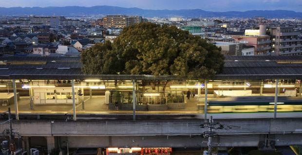 Удивительная японская станция, посреди которой растёт 700-летнее дерево