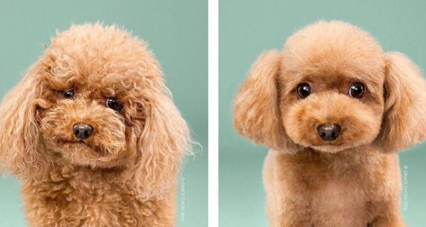 Собаки до и после посещения грумера
