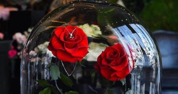 "Настоящая роза из ""Красавица и чудовище"" от Forever Rose London"