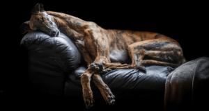 Победители конкурса собачьей фотографии Dog Photographer Of The Year 2017