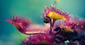Растения хищники в проекте Otherworldly Blues фотографа Joni Niemel